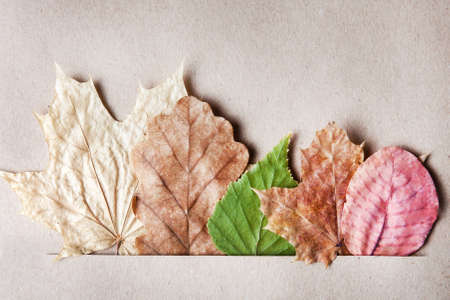 Pretty decorative dried leaves of differing shapes and soft muted colours arranged in a slit in textured paper