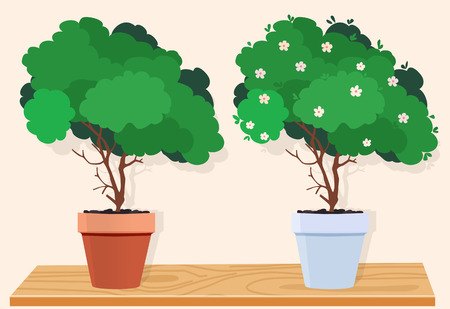flowerpots: A green tree in a brown pot and a green tree with white flowers in a white pot