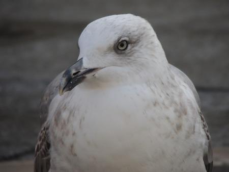 white bird: White bird captured very close Stock Photo