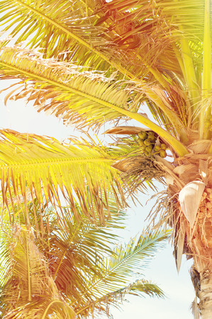 filtered: Vertical photo of exotic palm trees, filtered