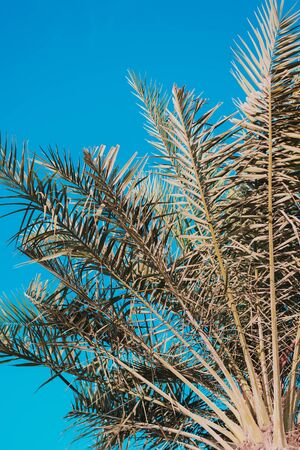 Vertical background with palm tree leaves and bright blue sky. Summer season 版權商用圖片