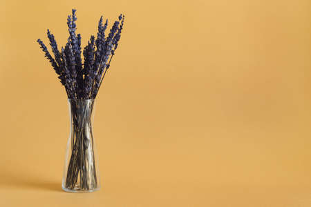 Dried lavender in a small glass vase on orange background. Dried flowers Stok Fotoğraf
