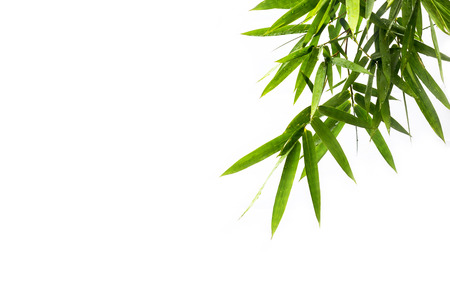 foreground: foreground from bamboo leaves on white