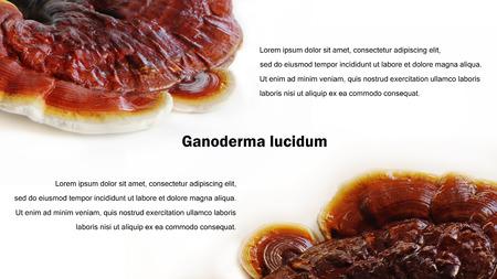 lucidum: Ganoderma lucidum background with sample text.
