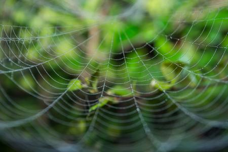Spinneweb in dauw druppels. Waterdruppels op een spinnenweb. Stockfoto