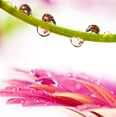 ladybirds between water drops Stock Photo - 11705975