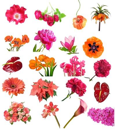 röda blommor samling