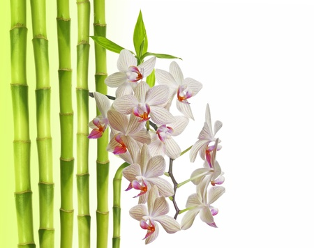 orchid and bamboo on white background Stock Photo