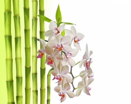 orkidé och bambu på vit bakgrund