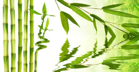 bamboo twig reflecting in water level  photo