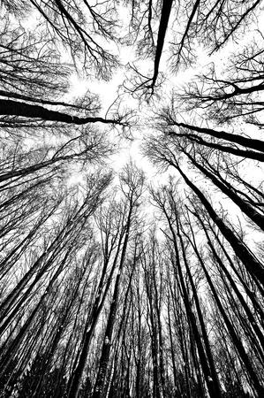 silhouette arbre hiver: en noir et blanc, silhouettes arbres