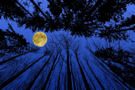 night forest with trees silhouettes on blue night sky photo
