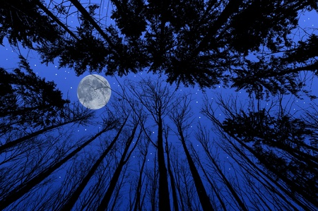 night forest with trees silhouettes Stock Photo