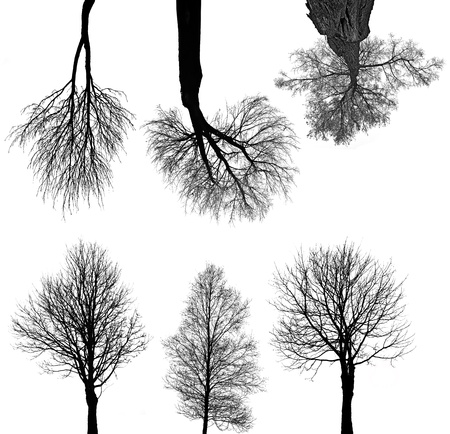 black trees silhouettes isolated on white background  photo