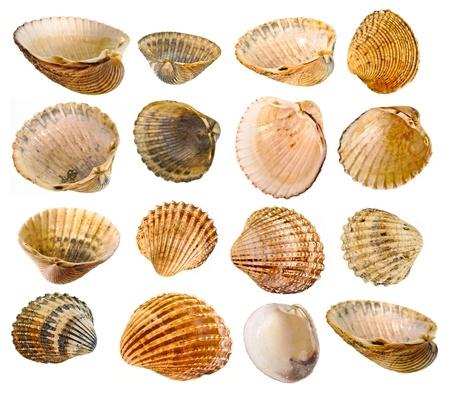 Shell kolekce Reklamní fotografie