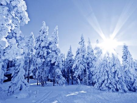 winter sunrise Stock Photo - 12653245