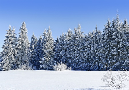 winter Stock Photo - 12653282
