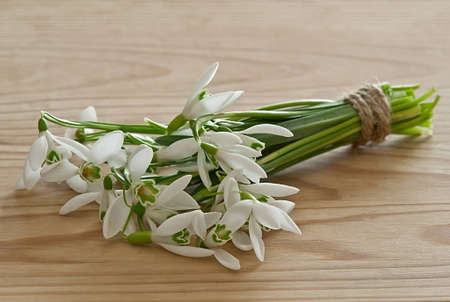 bouquet of snowdrops on wooden background photo