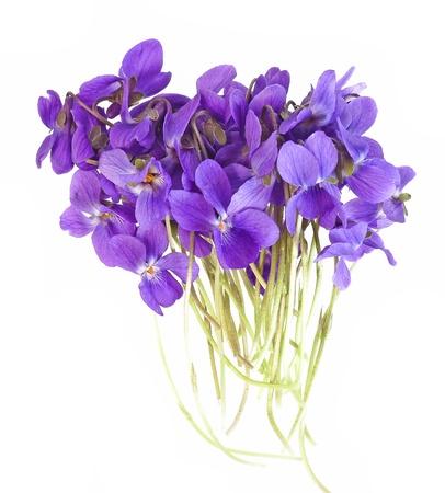 violets Stock Photo - 12884412