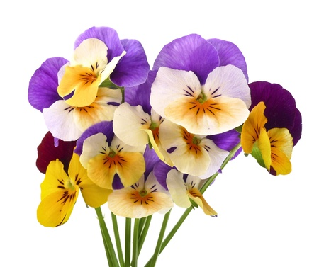 blue violet bright: little bouquet of pansy flowers