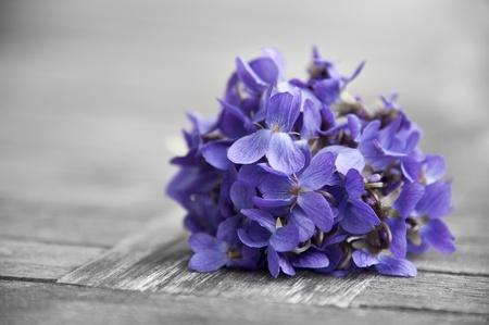 violeta: bounch de violetas de primavera Foto de archivo