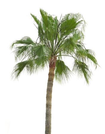 subtropics: palma