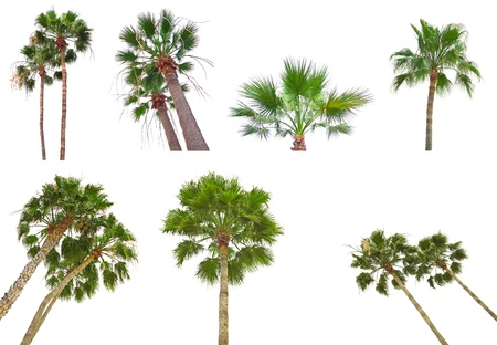 palm trees isolated - collection photo