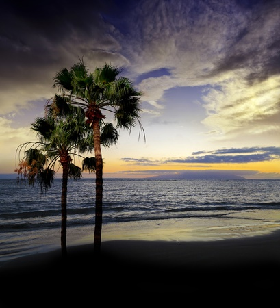 sunset above sea and palms Stock Photo - 13372088
