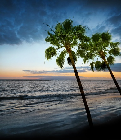 sunrise and ocean and palms Stock Photo - 13372087