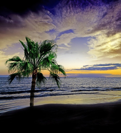 sunset above sea and palm Stock Photo - 13372083