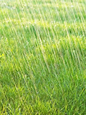 rainfall: grass and rain - background Stock Photo