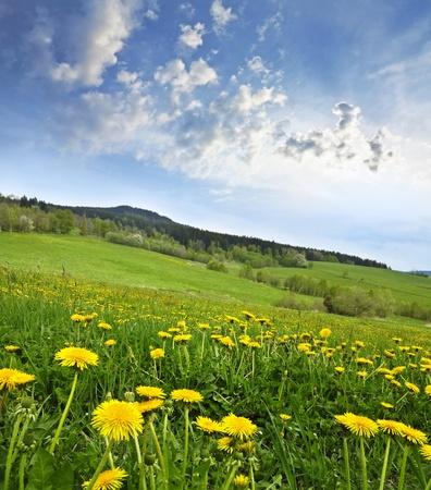 Våren äng med maskrosor Stockfoto