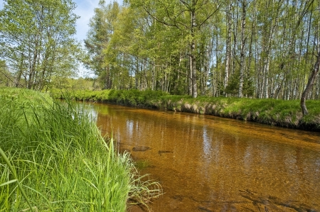 river with golden sand - Vltava, Czech republic, Europe Stock Photo - 13724731