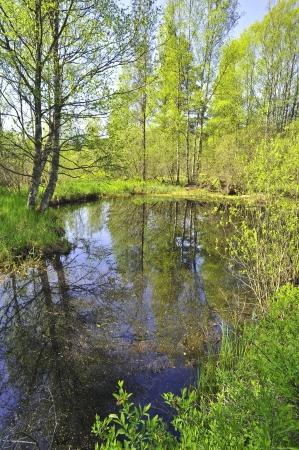 muck: bog muck lake