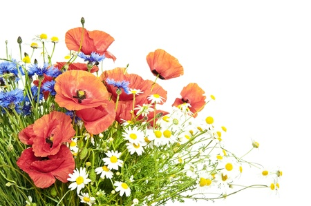poppies, daisies ,cornflowers in bouquet on white background Stock Photo - 13895929