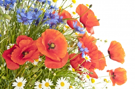 poppies and other meadow flowers photo