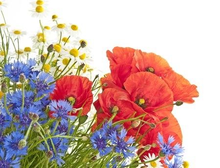 garden cornflowers: meadow flowers Stock Photo