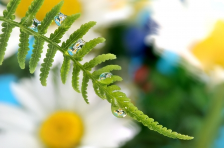 mirroring: fern with dew drops with mirroring effect inside