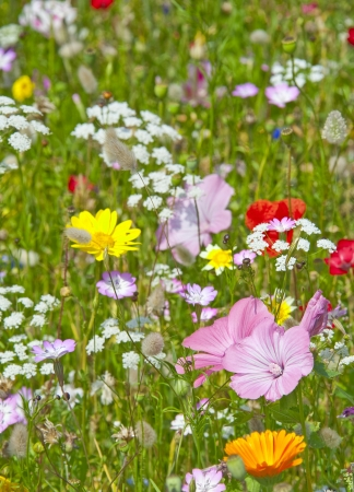 flower bed with wild meadow flowers photo