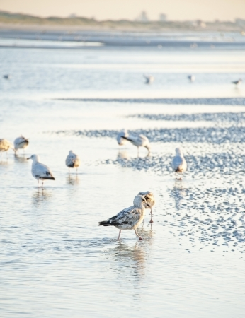 flock of gulls on a sunset beach Stock Photo - 14719011