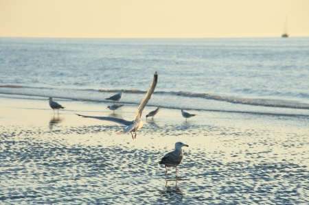 sunset time on a beach with birds - romantic view Stock Photo - 14719018