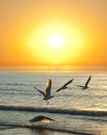 sunset and flying birds Stock Photo - 14719019