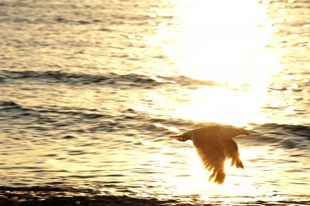 sunset and flying bird - romantic emotion Stock Photo - 14719004
