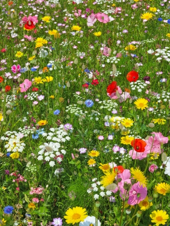 wild flower on a meadow photo