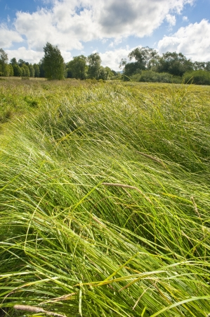summer meadow with high grass Stock Photo - 14961256