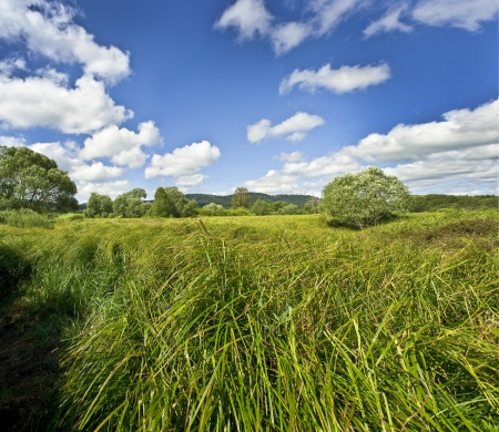 summer meadow with high green grass photo