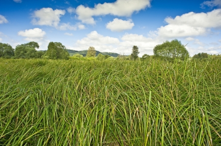meadow with high grass Stock Photo - 14961245