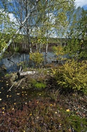 turba: turbera con peque�o lago