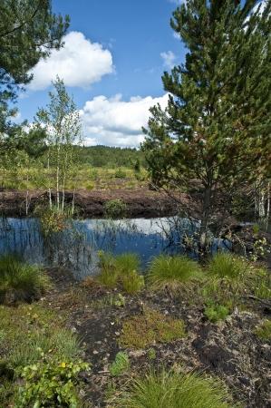 turba: turba lago pantano Foto de archivo