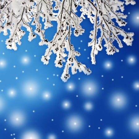 december: winter background with snow covered branch